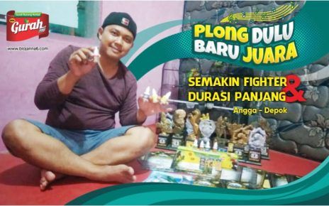 gurah burung alami herbal